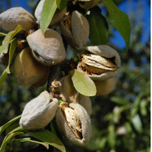 Almonds (Unpasteurized, Raw)