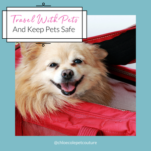 3 Clever Tips to Make Traveling with Pets a Breeze