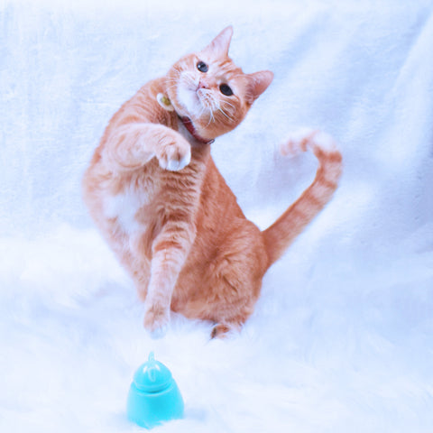 Sunshine Play Toy 2019 copyright  | Chloe Cole Pet Couture do not copy