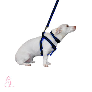 Blue Line of Stars Dog Harness (Black)