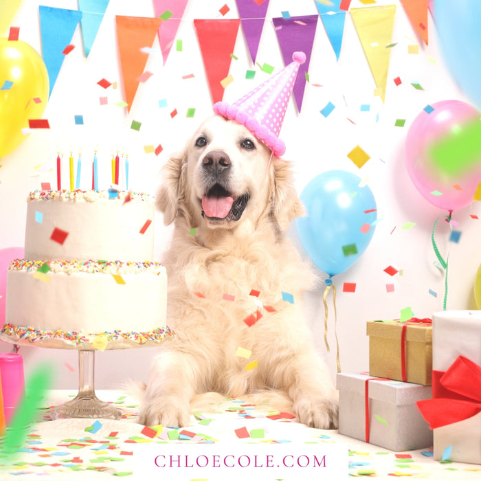 Pet Birthday - Personal Shopping Appointment