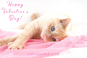 Cat Valentine's Day Gift Card