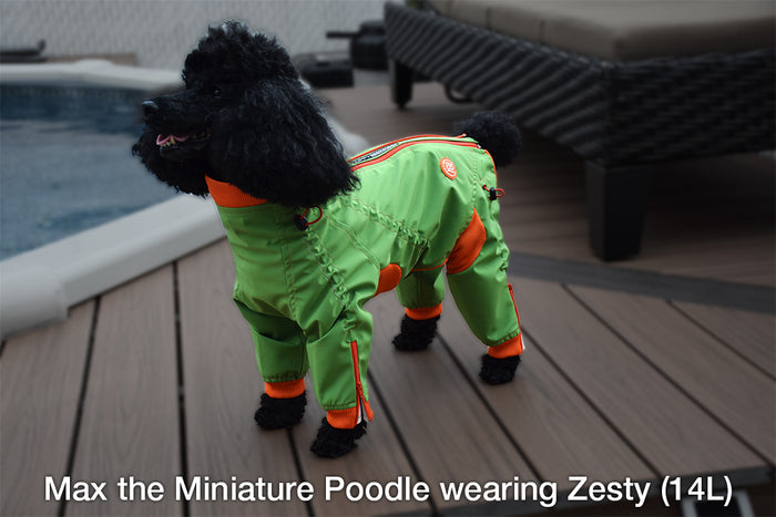 Edgy Dog Body Suit