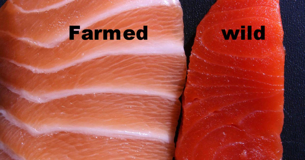 Farmed Vs. Wild Salmon-Does It Matter?