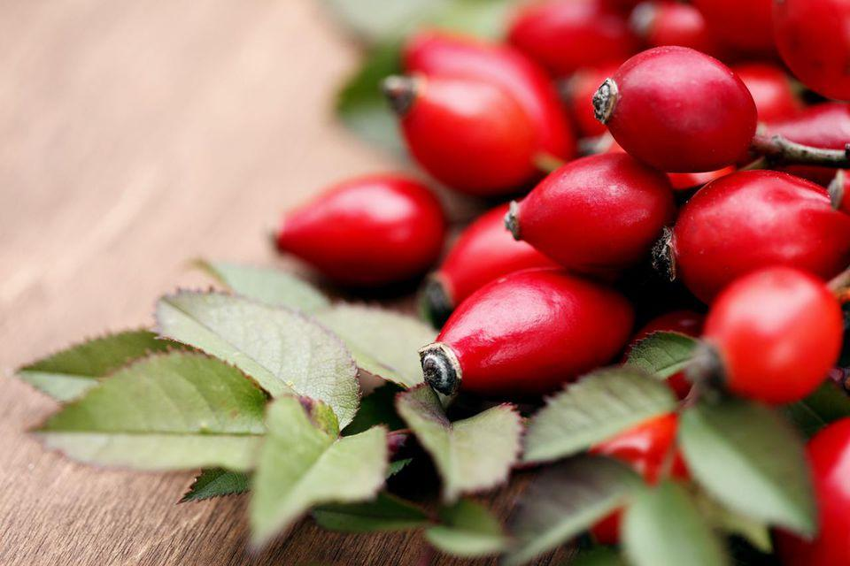 Herbal Treatment for Horses with Rosehips