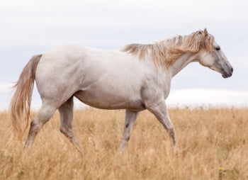 Horse allergies – natural remedies that work