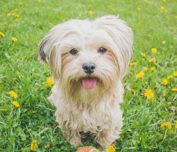 Four naturally calming herbs for dogs