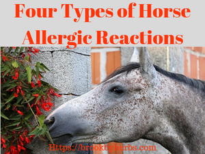 Four Types of Horse Allergic Reactions
