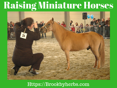 Raising Miniature Horses