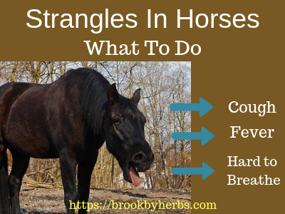 Strangles in Horses - What To Do