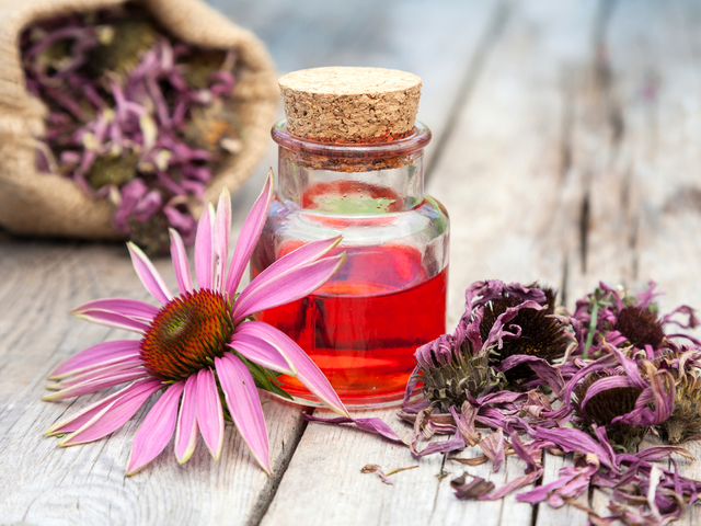 Echinacea: an aid on fighting infections in horses