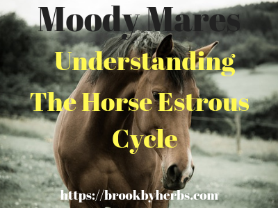 Understanding the Mare Horse Estrous Cycle