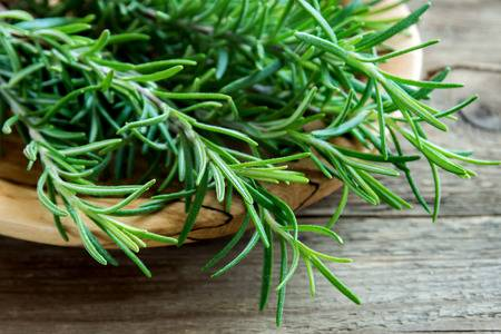 USING ROSEMARY FOR HORSES