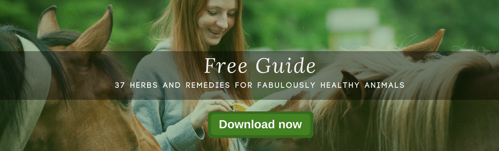 37 herbs and remedies for fabulously healthy animals