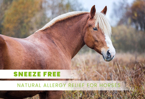 sneeze free allergies