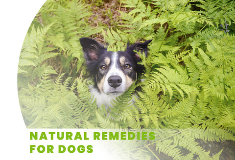 General Health - Organic Herbal Health for Dogs