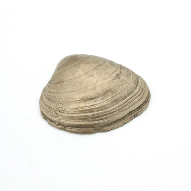 Quahog Shell Bottle Opener | Bronze