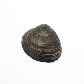 Quahog Shell Bottle Opener | Dark Bronze