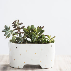 Shortie Planter | Golden Raindrops