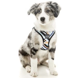 FuzzYard, Dog Collars & Harnesses, Sonic Step In Harness