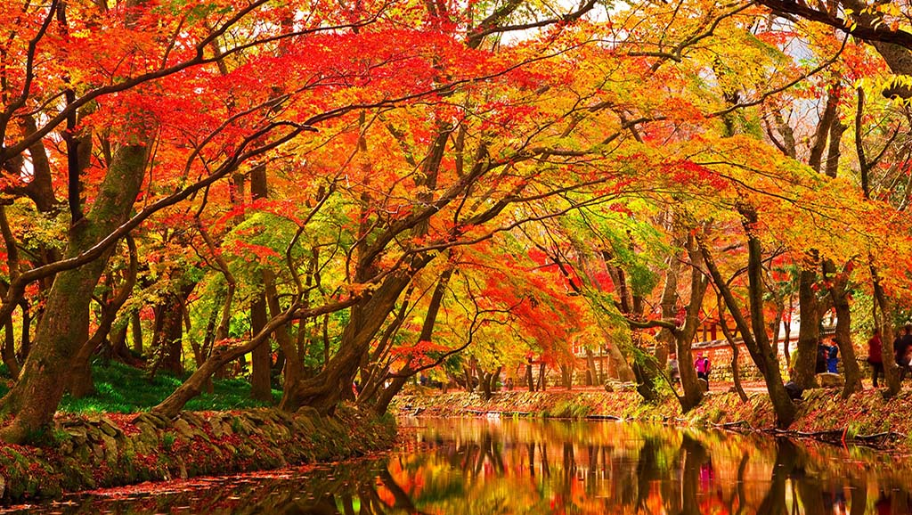 Colourful autumn trees by river