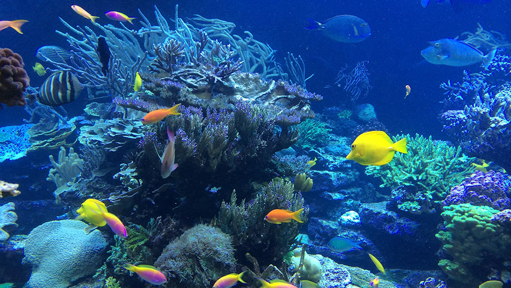 Colourful underwater scene of tropical fish and coral