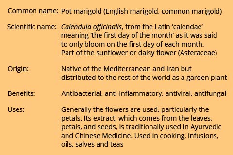 A table of key facts about Calendula or marigold