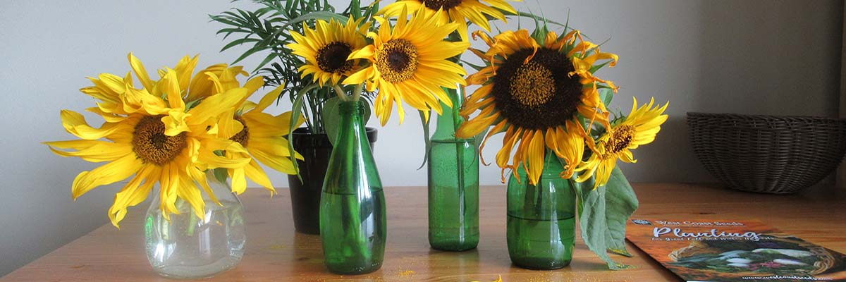 Green glass vases with sunflowers