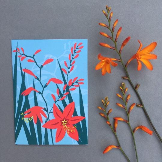 Greetings card of red Crocosmia flowers designed by Alison Bick