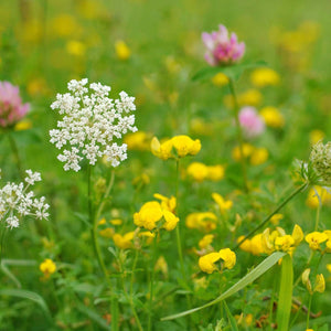 Meadow with pink, yellow and white flowers