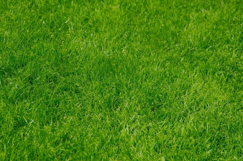 Synthetic Grass Maintenance and Installation: A Complete Guide
