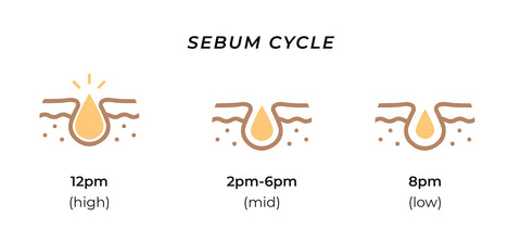 This is an image showing the rate of production of sebum during the day