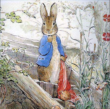 Peter Rabbit Card: Peter Gets Caught Olleke | Disney and Harry Potter Merchandise shop Hype