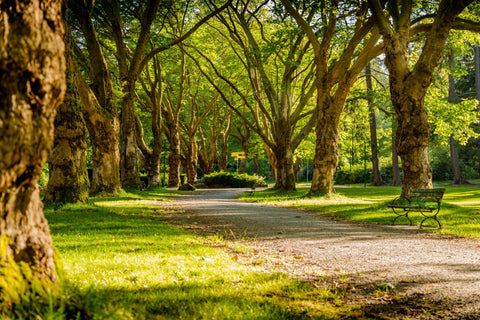 Park path surrounded by tree trunks and lush, green trees.