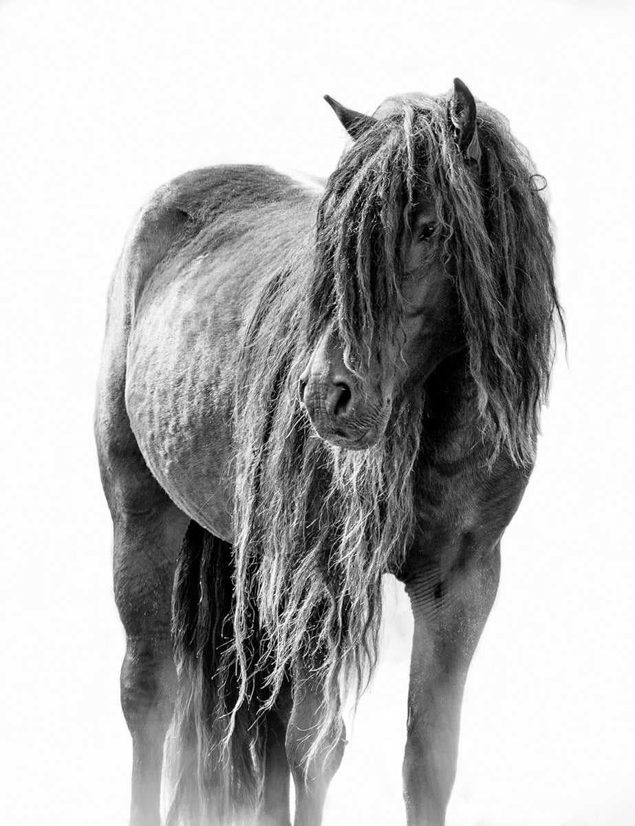 Sable Island Black Beauty