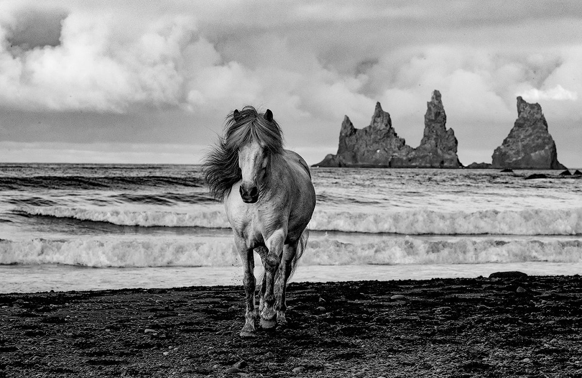 White Mare on a Black Sand Beach