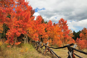 Country Fence and Fall Colors in the Colorado High Country