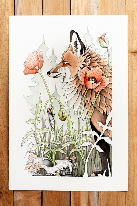 Fox & Poppies