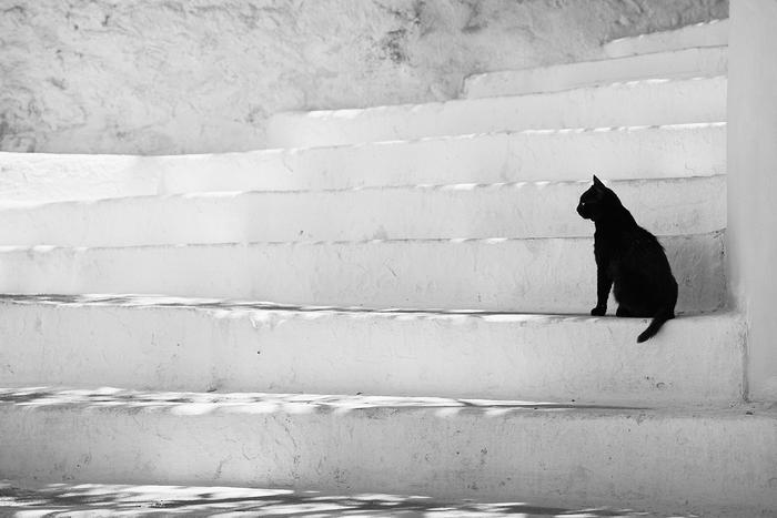 White steps, black cat