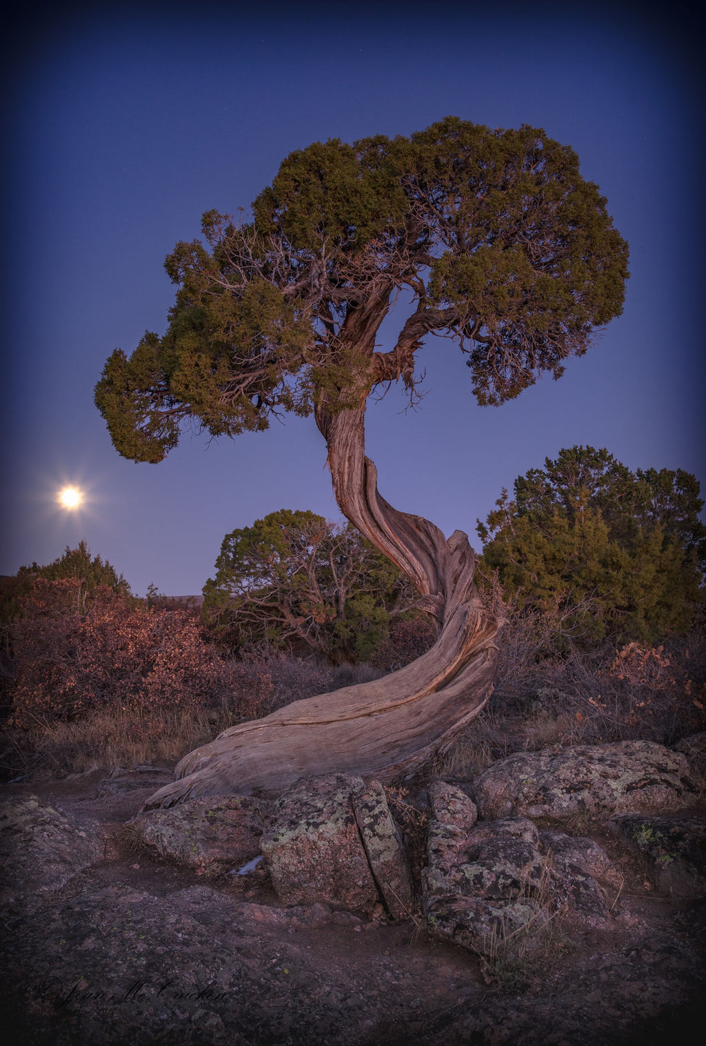 Juniper Tree in the Full Moon, Black Canyon of the Gunnison