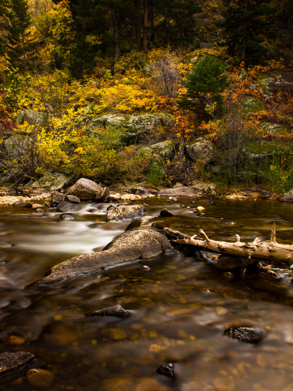 Creekside Fall