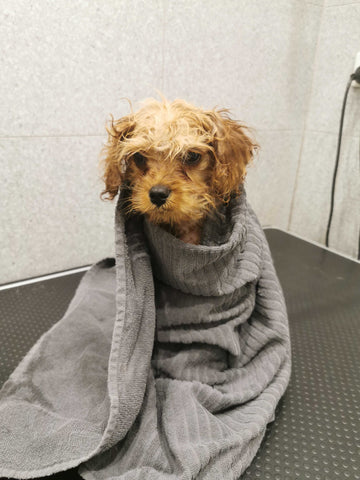 puppy's first bath
