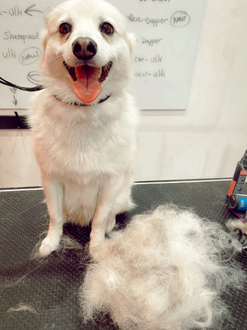 Dog de-shedding at The Fur Salon