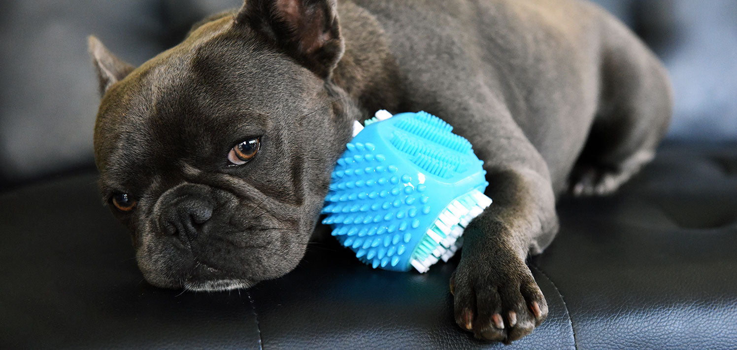 Rufus & Coco Clean & Chew Dental Toy