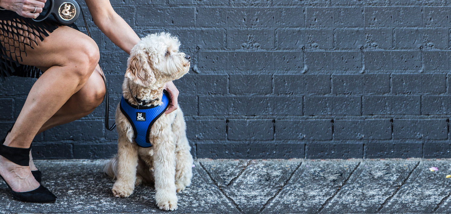 Comfortable soft mesh harness for dogs