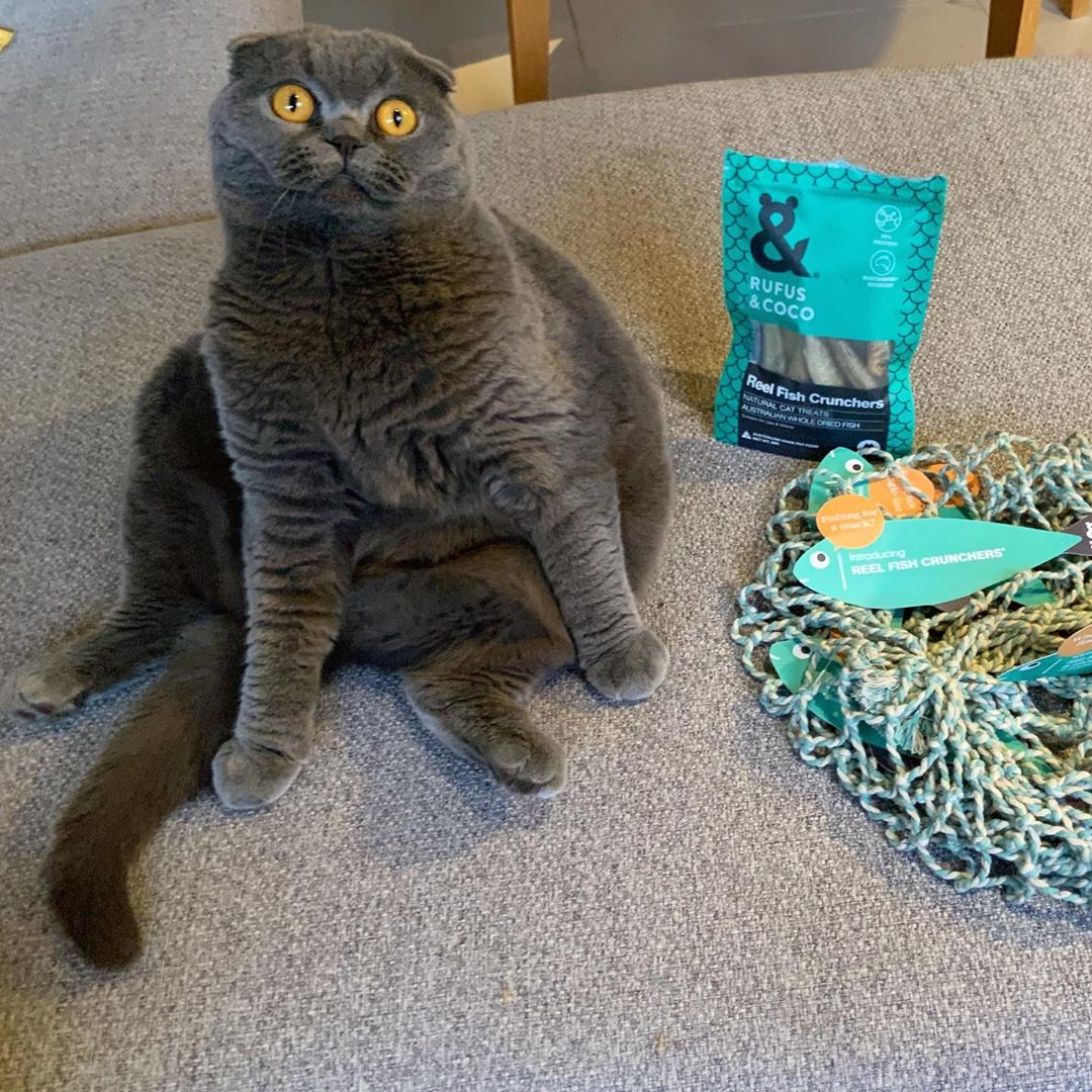 murphythefold with Reel Fish cat treats by Rufus and Coco