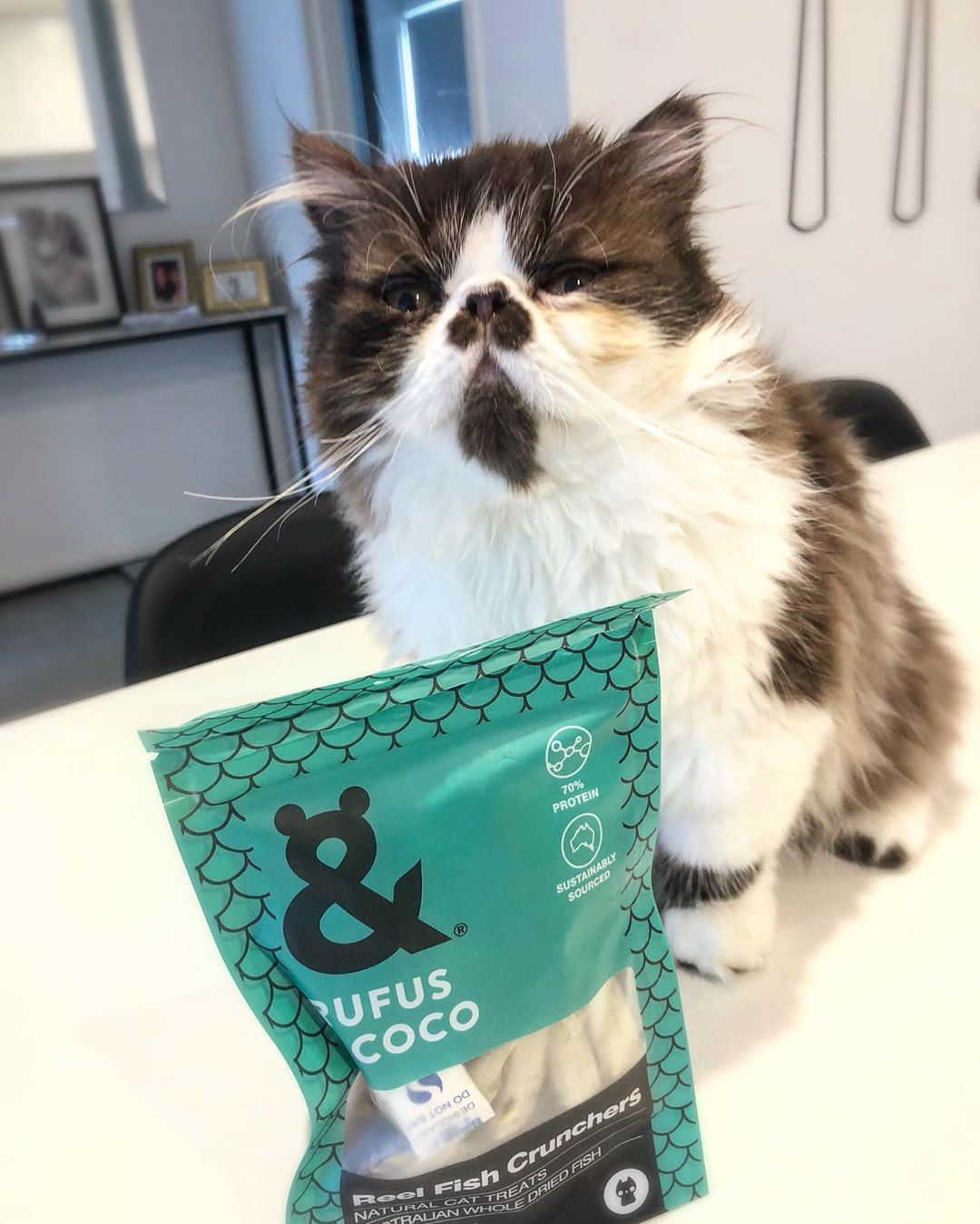 spades.the.persian.cat with Reel Fish cat treats by Rufus and Coco