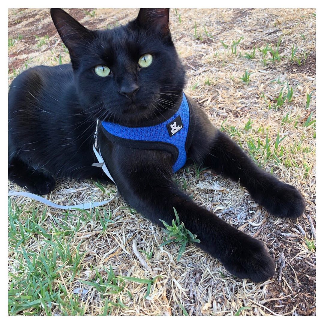 @lucaandvadermusilli with Soft Mesh Cat Harness by Rufus & Coco