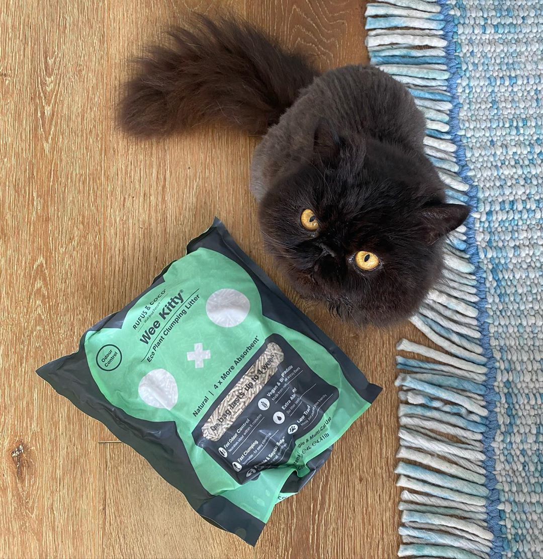 perseusthepersian with Wee Kitty Cat Litter by Rufus and Coco