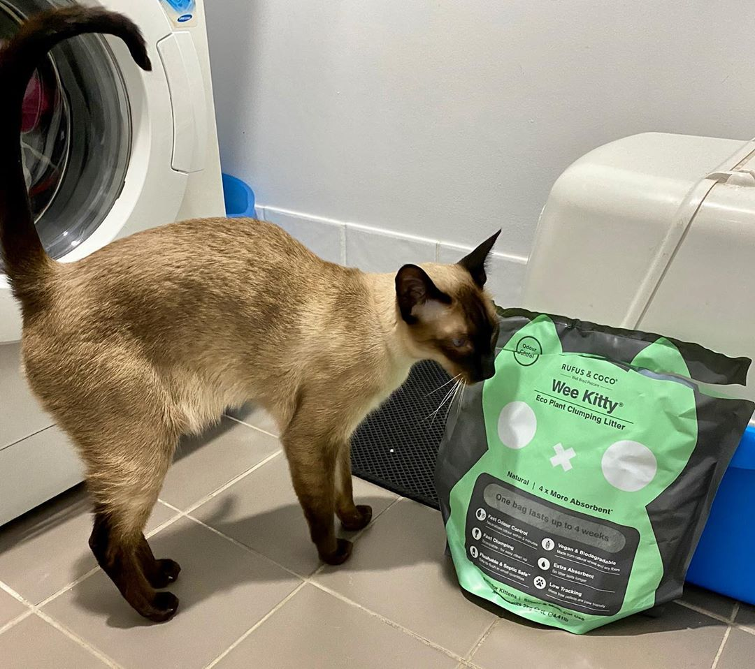kazplum with Wee Kitty Cat Litter by Rufus and Coco